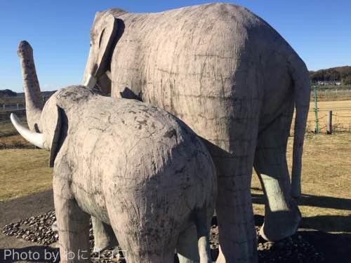 ナウマン象のお尻