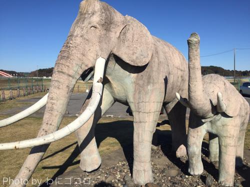 【印西】双子公園のゾウさんは乾燥肌?